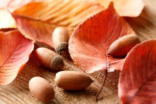 紅葉した桜の葉とドングリの写真素材 [FYI02358152]