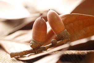 シラカシの葉とドングリの写真素材 [FYI02358194]
