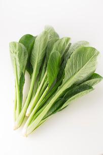 白バックの小松菜の写真素材 [FYI02358350]