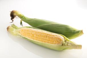 白バックのトウモロコシの写真素材 [FYI02358399]