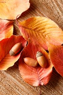 紅葉した桜の葉とドングリの写真素材 [FYI02358469]