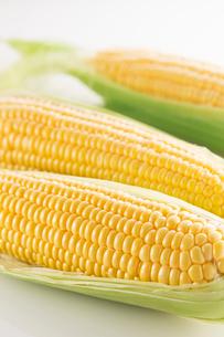 白バックのトウモロコシの写真素材 [FYI02358474]