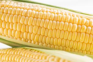 白バックのトウモロコシの写真素材 [FYI02358512]
