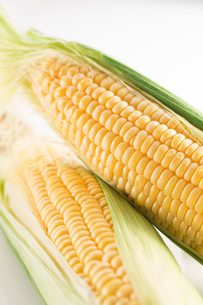 白バックのトウモロコシの写真素材 [FYI02358802]