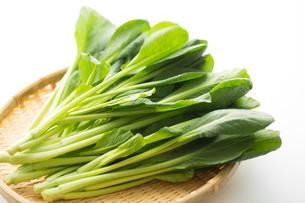 小松菜の写真素材 [FYI02359093]