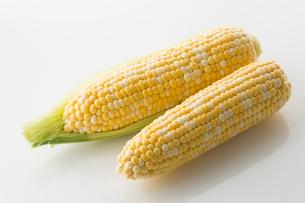 白バックのトウモロコシの写真素材 [FYI02359101]
