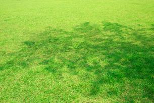 木の陰と芝生の写真素材 [FYI02359132]