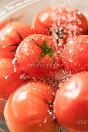 トマトを洗うの写真素材 [FYI02359410]