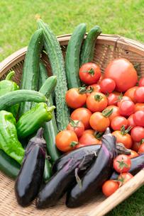 無農薬栽培の夏野菜の写真素材 [FYI02359459]