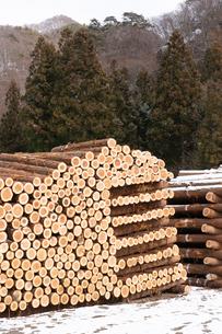 積み上げられた材木の断面と雪の写真素材 [FYI02359685]