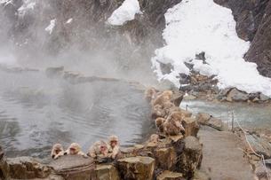地獄谷温泉の猿の写真素材 [FYI02359720]