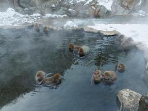 地獄谷温泉の猿の写真素材 [FYI02359966]