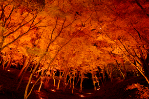 香嵐渓の紅葉の写真素材 [FYI02360045]