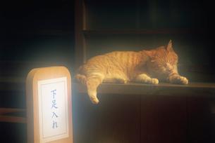 寝そべる猫 深大寺の写真素材 [FYI02360372]
