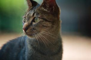 猫 神代植物公園・水生植物園の写真素材 [FYI02360493]