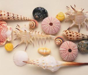 貝殻各種の写真素材 [FYI02361878]