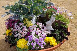 鉢花の写真素材 [FYI02361972]