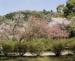 葛原ヶ岡公園の写真素材 [FYI02362962]
