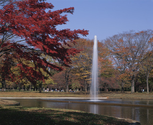 代々木公園の写真素材 [FYI02362965]