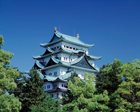名古屋城の写真素材 [FYI02364677]