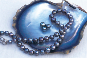 石垣島 黒真珠の写真素材 [FYI02365152]