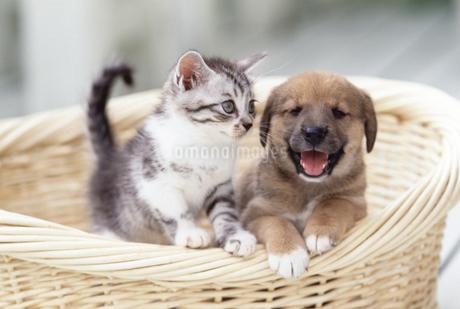 子犬と子猫の写真素材 [FYI02365593]