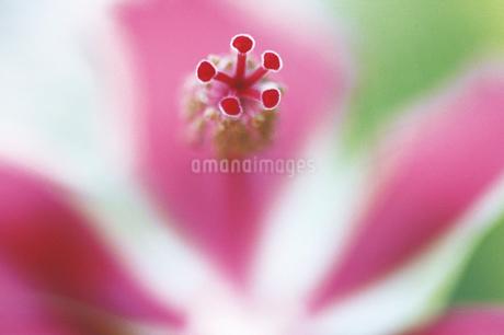 花のクローズアップの写真素材 [FYI02366736]