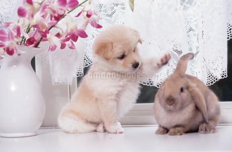 子犬とウサギの写真素材 [FYI02366754]