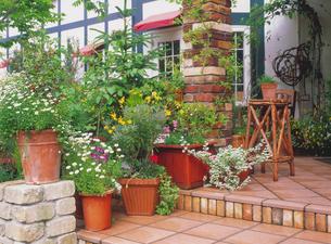 植木鉢の並んだ玄関の写真素材 [FYI02369868]