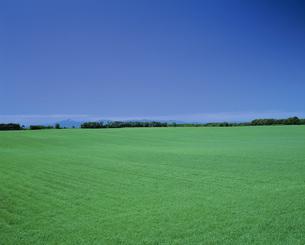 草原の写真素材 [FYI02371192]