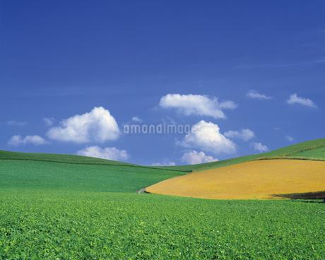 畑の写真素材 [FYI02371878]
