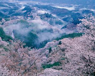 桜と吉野山の写真素材 [FYI02372430]