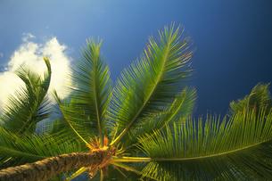 椰子の写真素材 [FYI02372963]