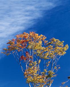 秋空の写真素材 [FYI02373785]