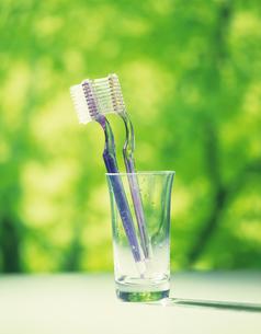 歯ブラシの写真素材 [FYI02374737]