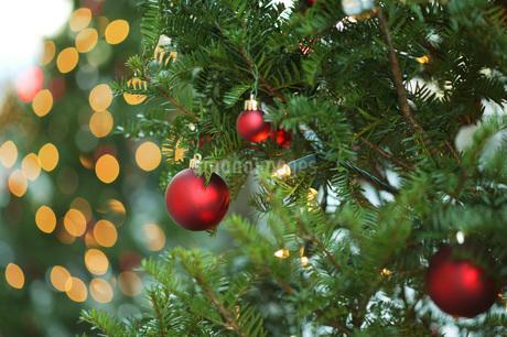 クリスマスツリーの写真素材 [FYI02375477]