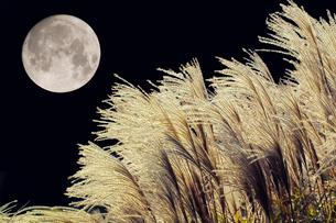 ススキと月の写真素材 [FYI02376723]