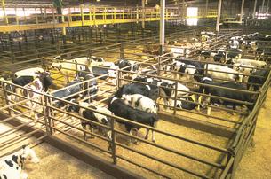 牛舎の写真素材 [FYI02377133]