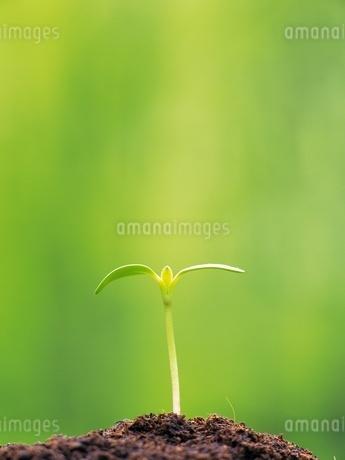 新緑イメージの写真素材 [FYI02379566]