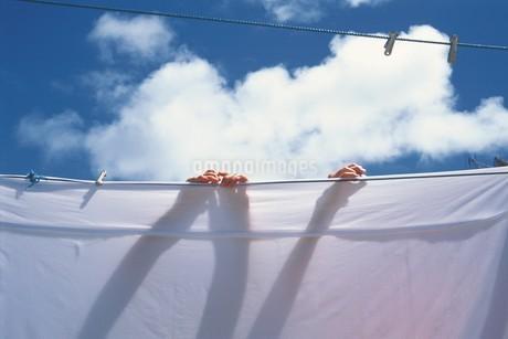 洗濯イメージの写真素材 [FYI02383577]