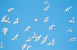 鳥の写真素材 [FYI02386354]