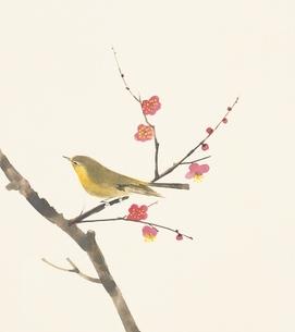 梅とうぐいす イラストのイラスト素材 [FYI02387313]