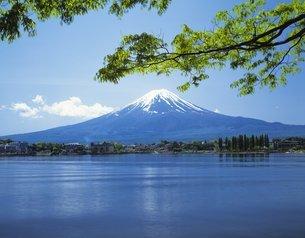 新緑と富士山の写真素材 [FYI02388179]