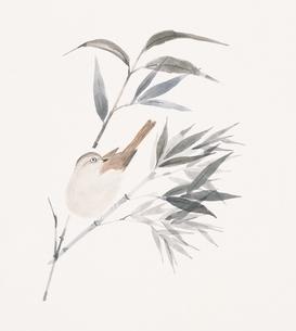 竹とスズメ イラストのイラスト素材 [FYI02389591]