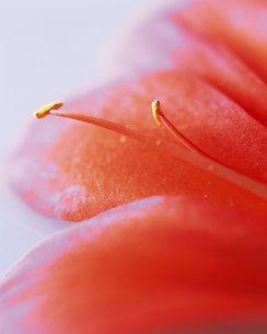花クローズアップの写真素材 [FYI02391609]