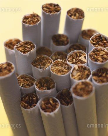 たばこイメージの写真素材 [FYI02391714]