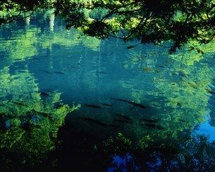 水面と魚の写真素材 [FYI02392656]