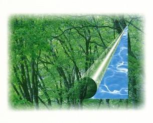 森林のCGイメージの写真素材 [FYI02398861]