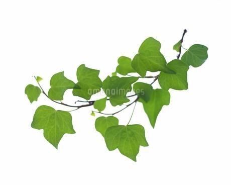 緑葉イメージの写真素材 [FYI02398880]