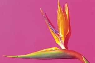 南国の植物の写真素材 [FYI02399794]